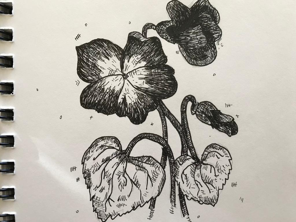 An ink picture of a flower